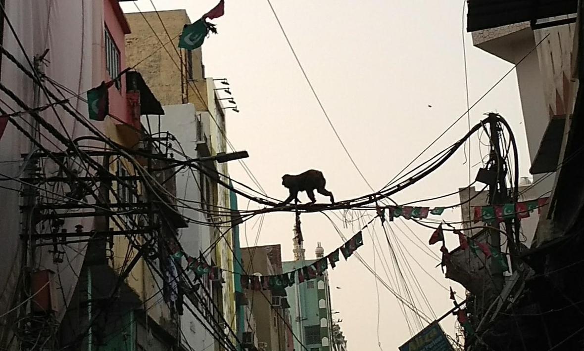 A monkey walks on wires that cross a street