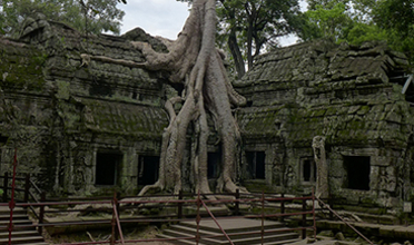 Courtyard of a stone temple overgrown with tree trunks and moss