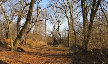Woodland area.