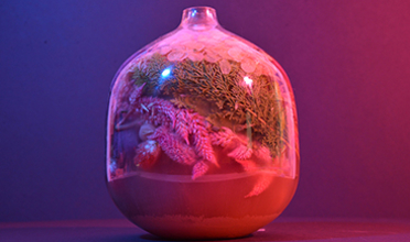 A bell shaped terrarium filled with plants and sand in pink and purple lighting
