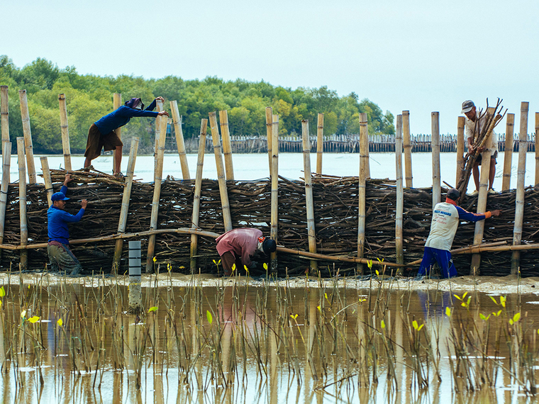 Five men constructing a wall-like structure in water out of bamboo and other natural materials