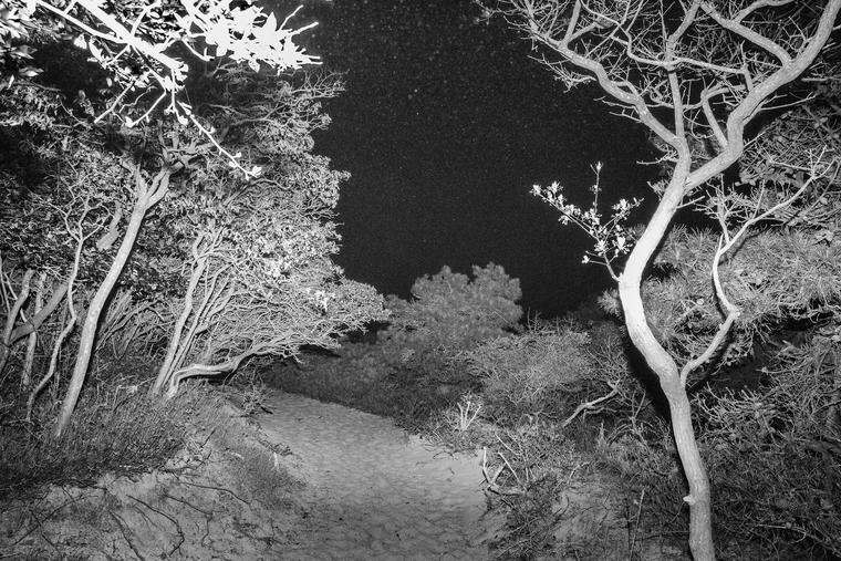 Gabriel Martinez, Meat Rack, 2015, 35mm slide projection