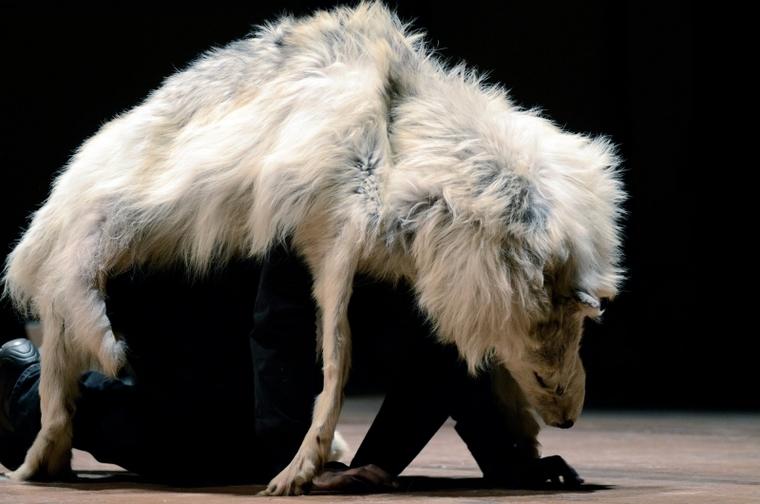 Performer wearing wolf skin