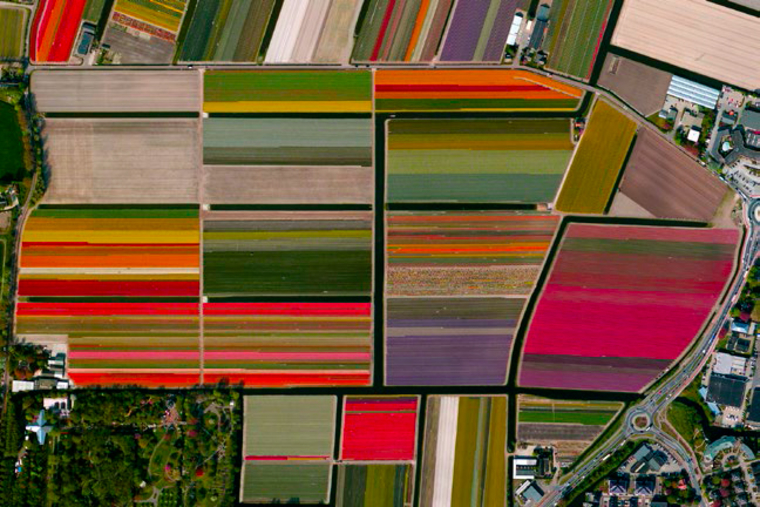 Colorful satellite view of fields of tulips.